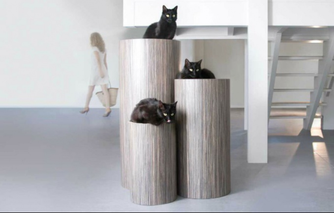 Modern cat magazine submissions